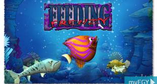 feeding frenzy game